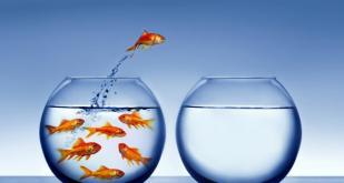 Plan de formation 2017 : Comment dépasser le prêt à penser ?