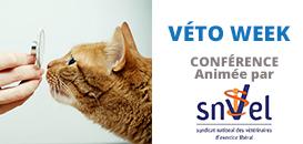 Modulation sur ordonnances …  ou les impacts des ordonnances de la loi Travailsur les structures vétérinaires