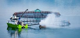 L'aquaculture, futur pilier économique de la Norvège