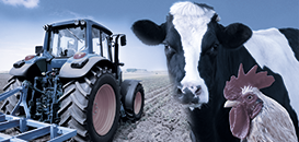 Algérie :  les opportunités dans l'élevage et l'agroéquipement