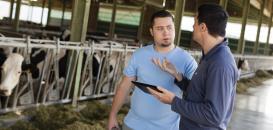 Travail et numérique : comment faire des robots de traite un vecteur de la qualité de vie au travail des éleveurs ?