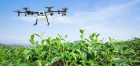 Agriculture 4.0: How to exploit earth observation images?