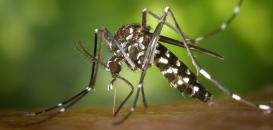 Vous êtes envahi par les moustiques ? Il est temps de dire STOP !