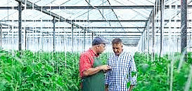 Agriculture connectée : les objets intelligents au service de la productivité