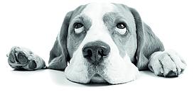 Comportement du chien : comment argumenter face aux idées reçues ?