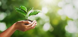 [Économie circulaire] Focus sur l'éco-conception : comment s'engager durablement ?