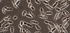 Stabilisation microbiologique pendant l'élevage : outils et applications