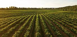 Risques et Opportunités du numérique dans la relation avec les agriculteurs