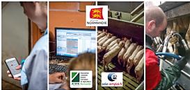 Comment devenir Agent(e) d'élevage laitier ou porcin ?