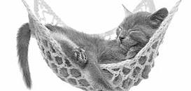 Les chats, qu'avons-nous à gagner à mieux les comprendre ?