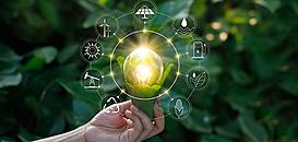 Out of the Box : Eco-responsabilité et innovation managériale au service d'un emballage plus durable ?